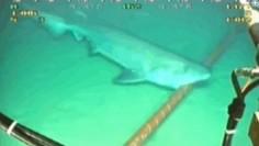 Köpek balıkları Google' a saldırdı
